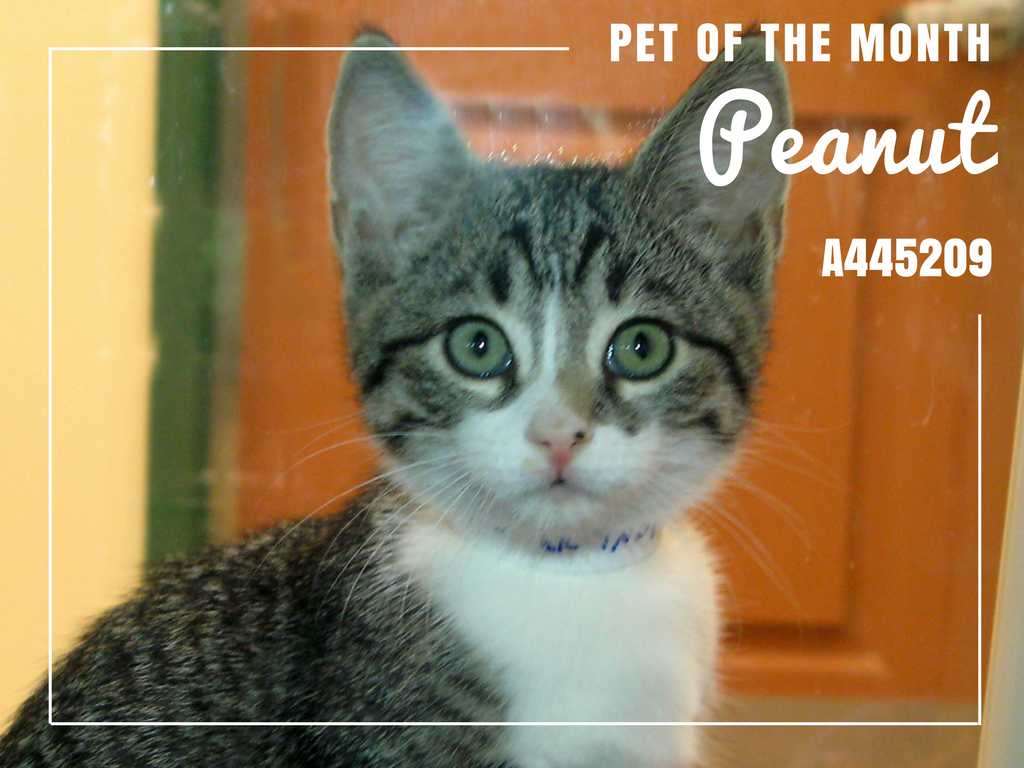 Pet of the Month - Peanut