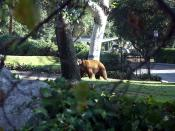 bear_in_monrovia_photo