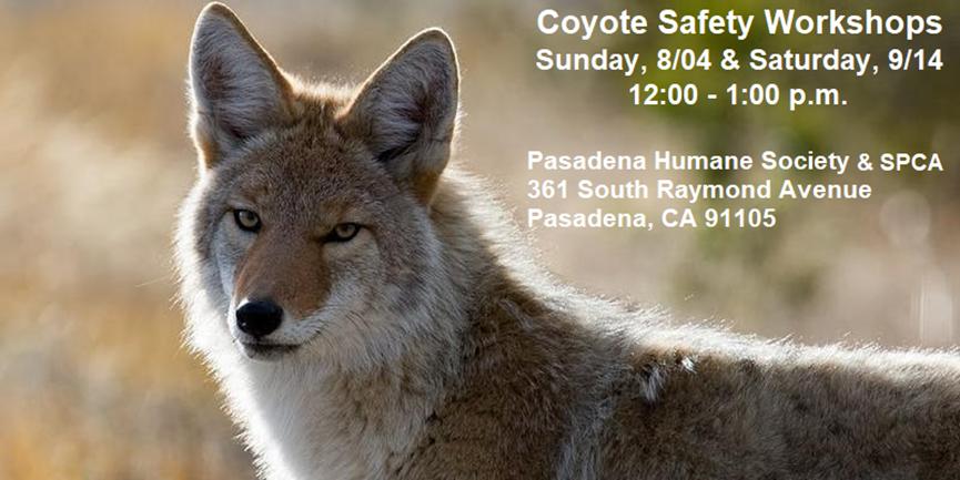 Pasadena Humane Society Coyote Workshop